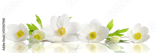 White anemone flowers Wallpaper Mural