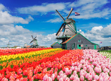 Two Traditional Dutch Windmill...
