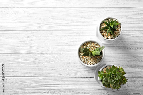 Poster Pays d Europe Succulents on wooden background