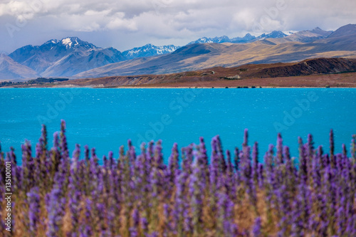 Staande foto Noord Europa Landscape view of lake Tekapo and mountains with blooming foreground