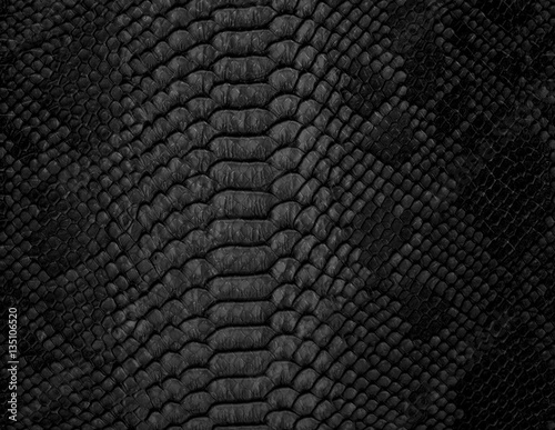 Photo sur Toile Les Textures Snake skin background. Close up.