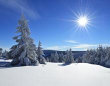 Tief Verschneite Unberührte W...