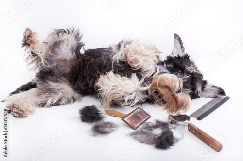 Dog with grooming equipment Wallpaper Mural