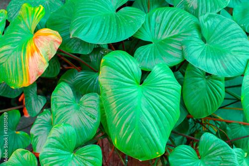 Fototapety, obrazy: Leaves