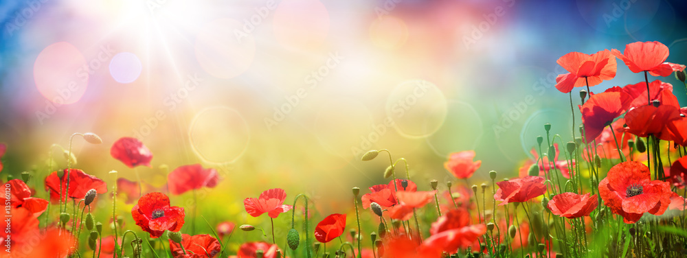 Fototapety, obrazy: Poppies Field At Sunset