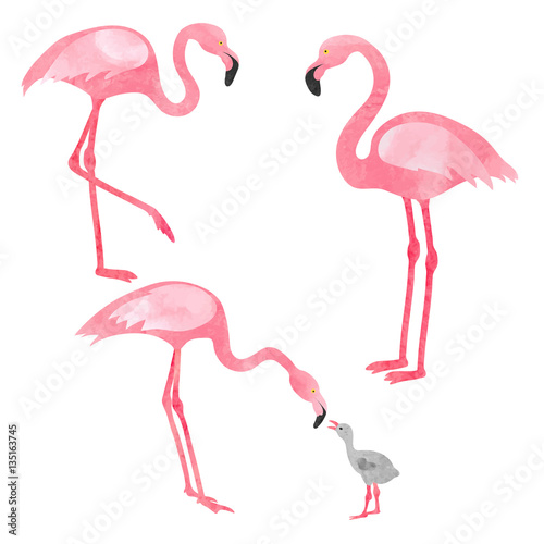 Photo Stands Flamingo Set of watercolor flamingos isolated on white. Vector illustration of flamingo with chick.