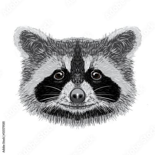 Photo sur Toile Croquis dessinés à la main des animaux racoon vector illustration