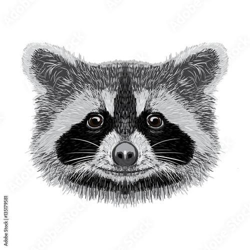Poster Croquis dessinés à la main des animaux racoon vector illustration