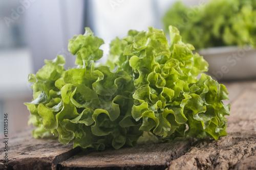 Valokuva  Green lettuce leaves