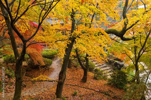 Tuinposter Weg in bos Maple tree in autumn season