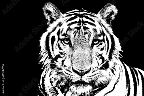 tiger-stencil-art