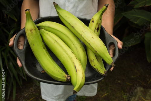 hands holding  cook bananas - regional tropical fruits in a try