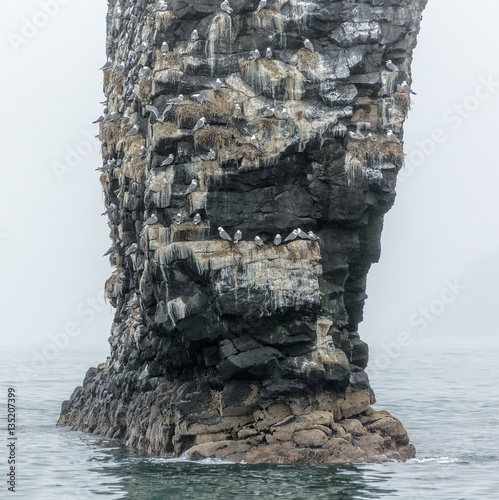 Photo  Rocks in the Pacific Ocean where birds nest at the entrance to the bay Avachinsk