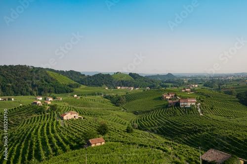 Fotografie, Obraz  Prosecco vinyards near Valdobbiadene
