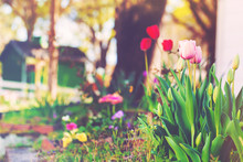 Flowers Blooming In A Home Garden