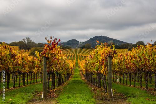 Papiers peints Vignoble vineyard