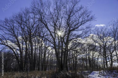 Fototapeta Sun light rays peeking through tall winter trees obraz na płótnie
