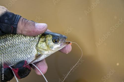 Fotobehang Vissen Fish caught fly fishing