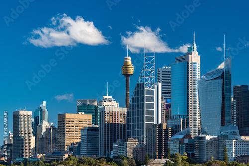 Garden Poster Sydney Sydney skyline on sunny day