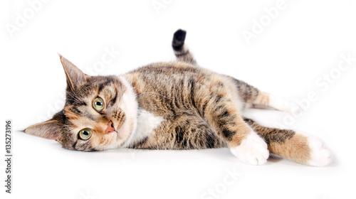 Fototapeta Liegende, zufriedene Katze