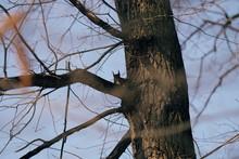 Squirrel On A Tree Brach