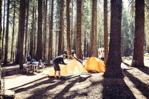 Camp in the coniferous forest of the Yosemite National Park at day, USA Wallpaper Mural