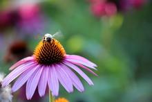 Butterflies And Bees In A Garden