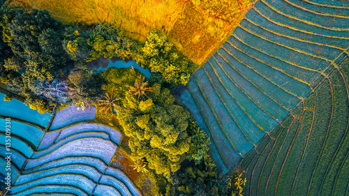 Foto auf Leinwand Reisfelder Rice fields of Bali island, Indonesia
