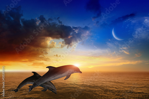 Spoed Foto op Canvas Dolfijn Marine life background - jumping dolphins, glowing sunset