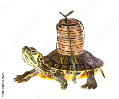 Poster Tortue Turtle with money