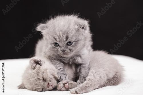 Foto auf Leinwand Zabaw Kotów