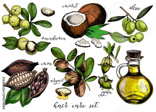 Fotografie, Obraz  Vector set of hair care ingredients