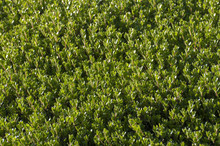 Green Forest Shrub Illuminated In A Clearing Light