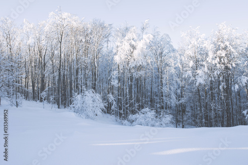 Poster Fleur Winter snowy and foggy mountain landscape.