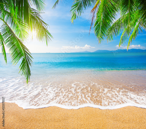 Foto auf Gartenposter Strand Palm and tropical beach