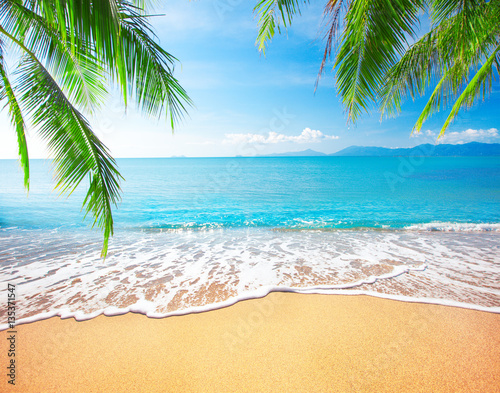 Staande foto Strand Palm and tropical beach