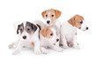 Cute funny puppies on white background