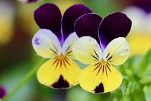 Beautiful Flower In The Garden