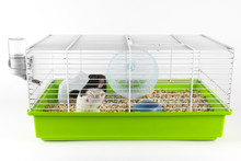 Funny Hamster Looking Out Of I...