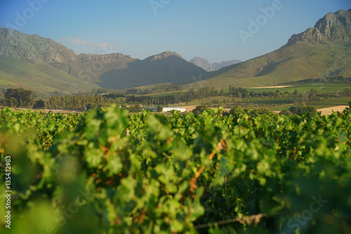 View of Stellenbosch vineyards, South Africa