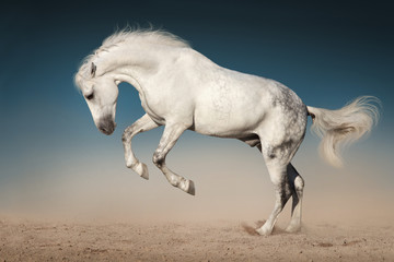 White horse jump in desert against blue sky