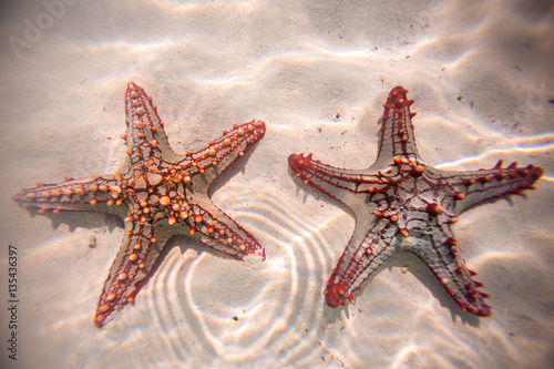 Photo Red starfish resting on the bottom of Indian Ocean