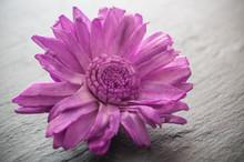Fleur Séchée Sur Ardoise