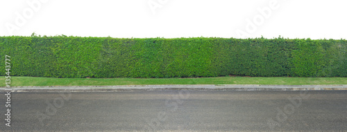 Fotografía Green leaves wall and asphalt road isolated on white background
