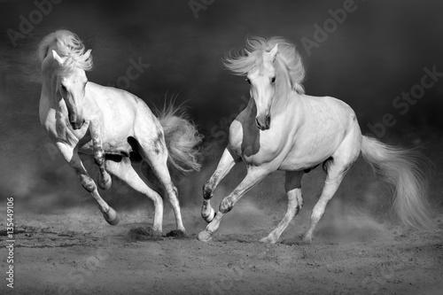zmagaj-sie-z-koniem-w-ruchu-na-pustyni-na-dramatycznym-ciemnym-tle-obraz-czarno-bialy