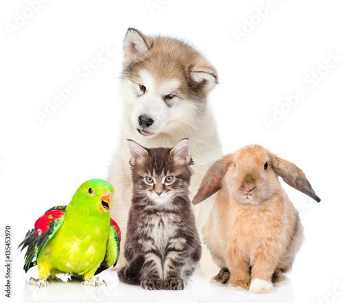 Group of pets. Isolated on white background © Ermolaev Alexandr