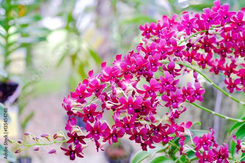 Staande foto Roze Orchid beautiful in garden at Thailand