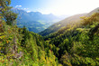 Scenic view of mixed pine and deciduous forest in South Tyrol, Renon/Ritten region, Italy