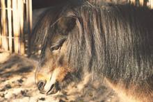 Black Pony Closeup