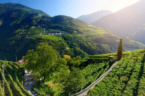 Plakat Malowniczy widok na winnice i orachardy jabłoni w regionie Trentino-Alto Adige w Południowym Tyrolu we Włoszech